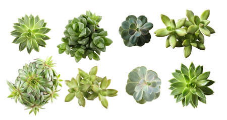 Collage with different succulents on white background, top view. Banner design Stock Photo