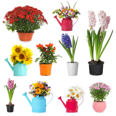 Set of different blooming plants in flower pots on white background