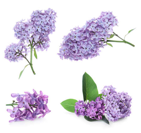 Set of fragrant lilac flowers on white background