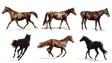 Collage with photos of horses on white background, banner design. Beautiful pet