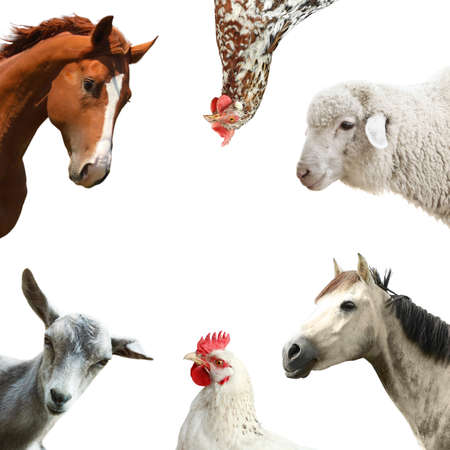 Collage with horse and other pets on white background Stockfoto
