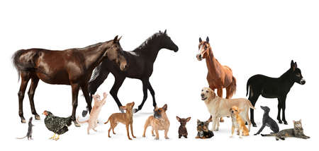 Collage with horses and other pets on white background. Banner design Foto de archivo