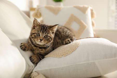 Cute tabby kitten on sofa indoors. Baby animal