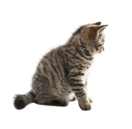 Cute tabby kitten on white background. Baby animal Archivio Fotografico