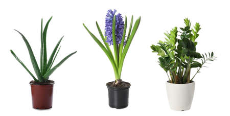 Set of different plants in flower pots on white background. Banner design 스톡 콘텐츠