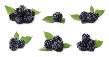 Set of ripe blackberries on white background, banner design 스톡 콘텐츠