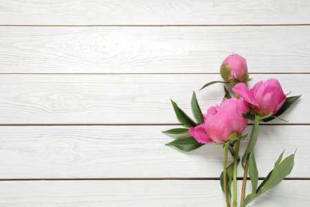 Beautiful pink peonies on white wooden background, flat lay. Space for text Standard-Bild