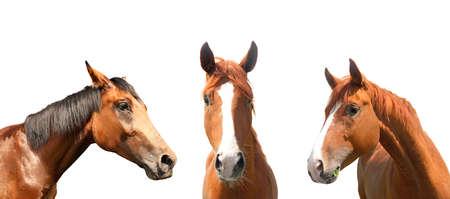Beautiful pet horses on white background, closeup view Standard-Bild