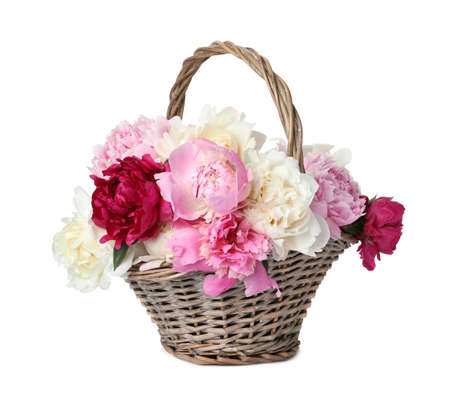 Beautiful peonies in wicker basket isolated on white Banque d'images