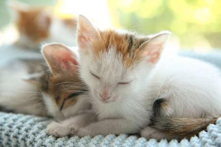 Cute little kittens sleeping on blue blanket, closeup. Baby animals 免版税图像