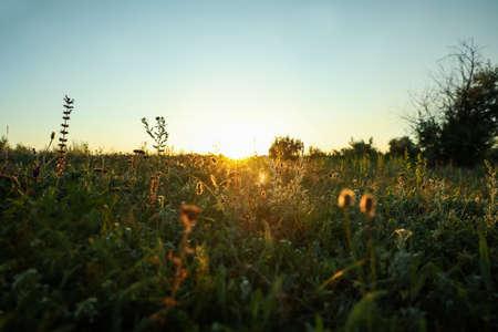 Beautiful field at sunrise. Early morning landscape