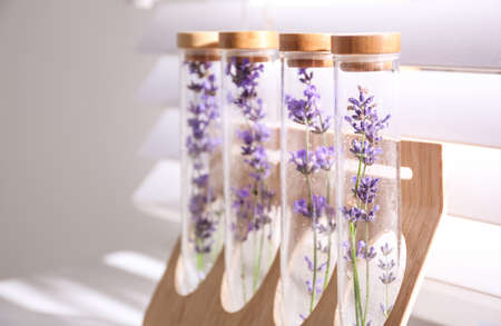 Beautiful lavender flowers near window indoors, closeup. Space for text Imagens
