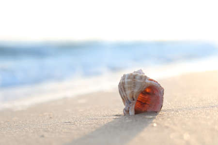 Sandy beach with beautiful seashell on sunny day. Space for text