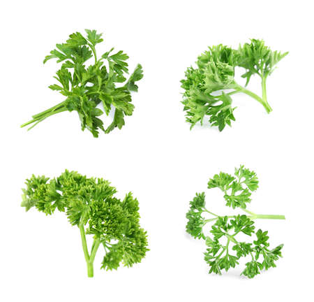 Set of green curly parsley on white background