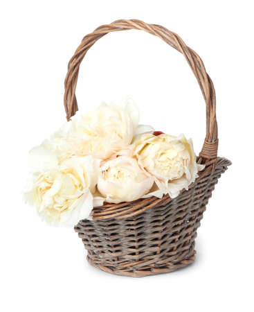 Beautiful peonies in wicker basket isolated on white Stock Photo