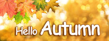 Text Hello Autumn and beautiful leaves on blurred background, bokeh effect Stock Photo