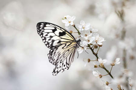 Beautiful rice paper butterfly on blossoming tree branch, closeup