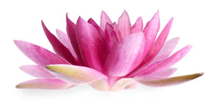 Beautiful blooming lotus flower isolated on white