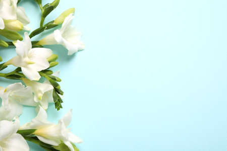 Beautiful freesia flowers on light blue background, flat lay. Space for text Stock fotó