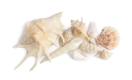 Beautiful exotic sea shells isolated on white, top view