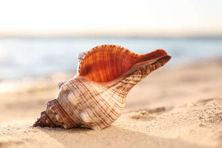 Beautiful exotic sea shell on sandy beach