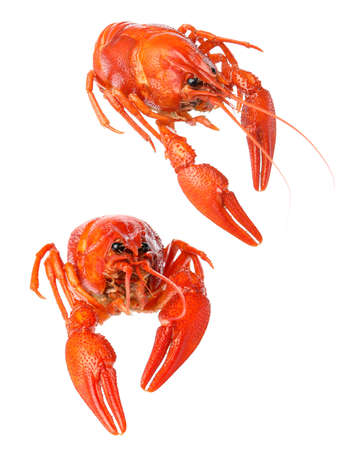 Tasty cooked crayfishes on white background. Seafood
