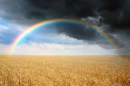 Amazing rainbow over wheat field under stormy sky