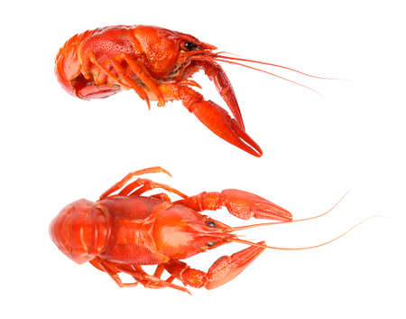 Two tasty cooked crayfishes on white background