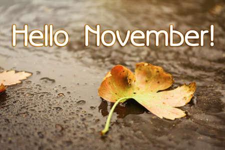 Hello November card. Autumn leaf on rainy day, closeup