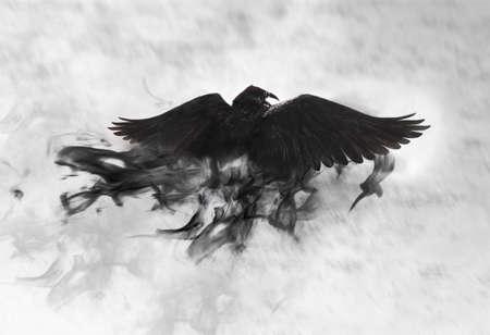 Black raven flying through mist, fantasy image Foto de archivo