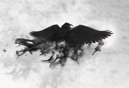 Black raven flying through mist, fantasy image Kho ảnh