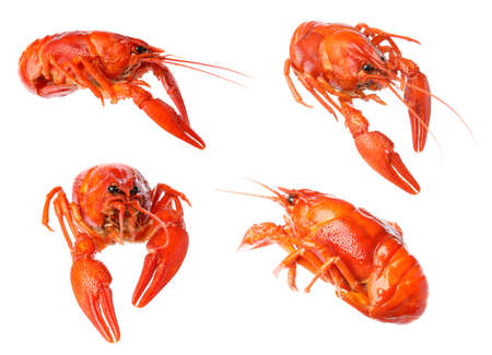 Set of tasty cooked crayfishes on white background Фото со стока