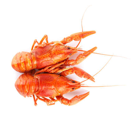 Delicious boiled crayfishes isolated on white, top view