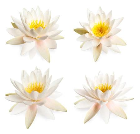 Set of beautiful lotus flowers isolated on white