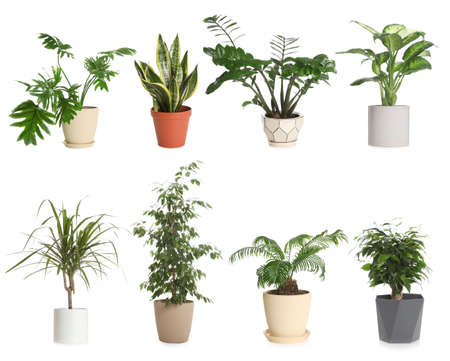 Set of different houseplants in flower pots on white background Stock fotó