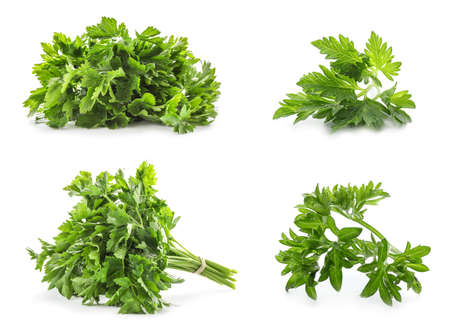 Set with green parsley on white background