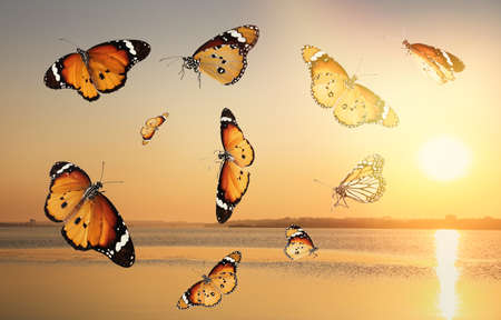 Beautiful butterflies flying over sea at sunset Stock Photo