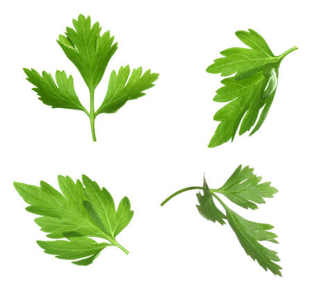 Set with green parsley leaves on white background