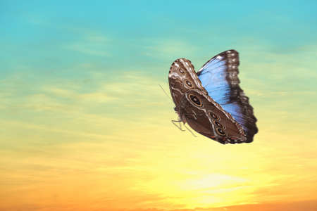 Beautiful butterfly flying in sky at sunset Stock Photo