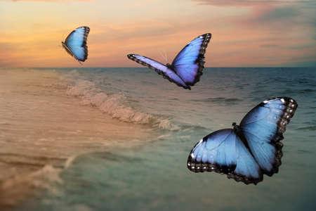 Beautiful butterflies flying over sea at sunset Stock fotó
