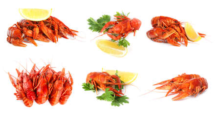 Set of tasty cooked crayfishes on white background. Banner design Stock Photo