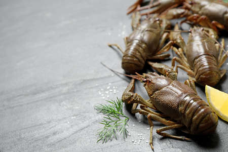 Fresh raw crayfishes with dill, salt and lemon on gray table. Space for text