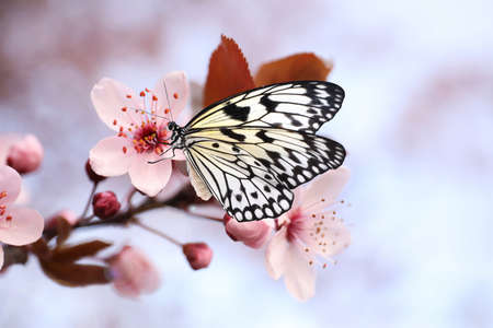 Beautiful rice paper butterfly on blossoming tree branch, closeup Standard-Bild