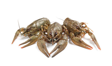 Fresh raw crayfishes isolated on white. Healthy seafood