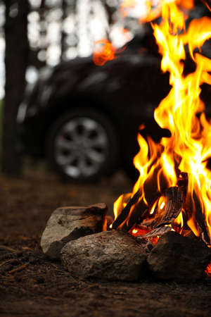 Beautiful bonfire with burning firewood near car in forest, closeup