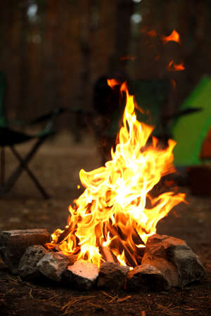 Beautiful bonfire with burning firewood near camping tent in forest