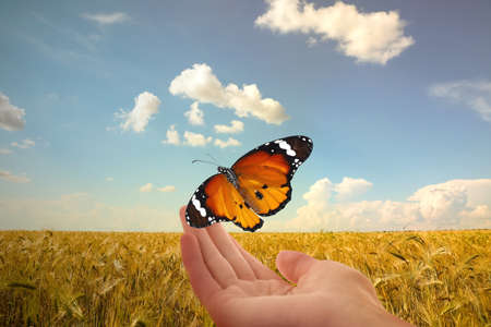 Woman with plain tiger butterfly in wheat field, closeup