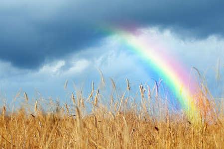Amazing rainbow over wheat field under stormy sky Reklamní fotografie