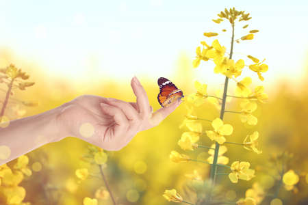 Woman holding beautiful plain tiger butterfly in flower field, closeup. Bokeh effect