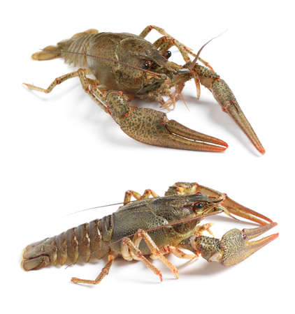 Collage with two fresh crayfishes on white background